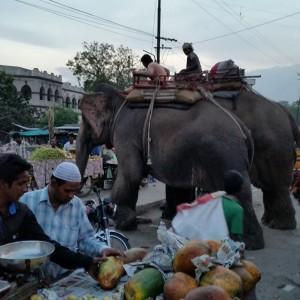 Udaipur market visits